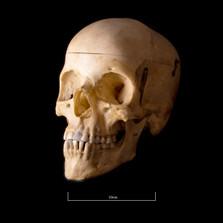 Skull NC1K - 9231.jpg