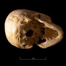 Skull B3R7 - 9166.jpg