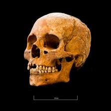 Skull 5082G - 6394.jpg
