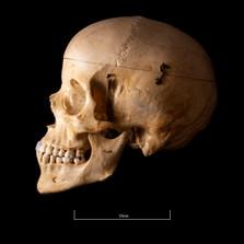 Skull NC1K - 9229.jpg