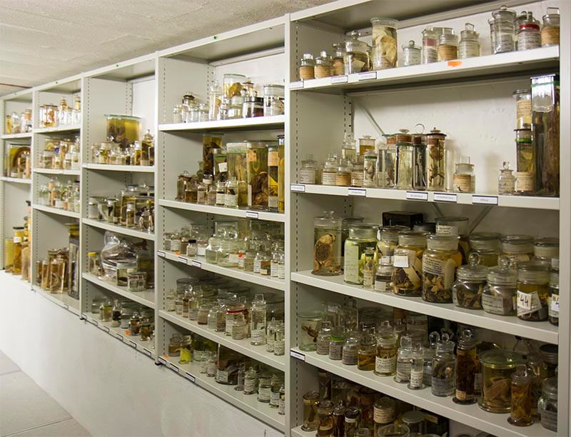 Oxford University Museum of Natural History wet specimen stores
