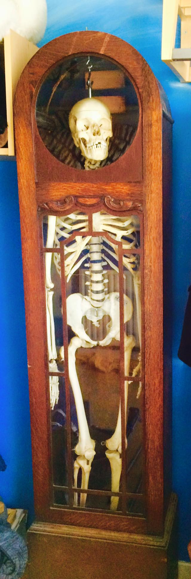 Medical skeleton hanging in a clock case