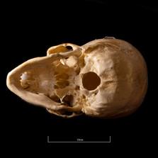 Skull NC1K - 9235.jpg