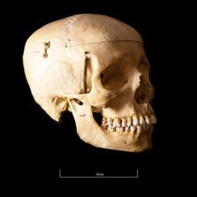 Skull B3R7 - 9162.jpg