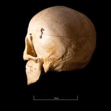 Skull NC1K - 9225.jpg