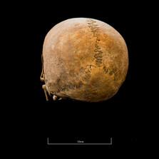 Skull A044EH - 6306.jpg