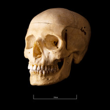 Skull B3R7 - 9152.jpg
