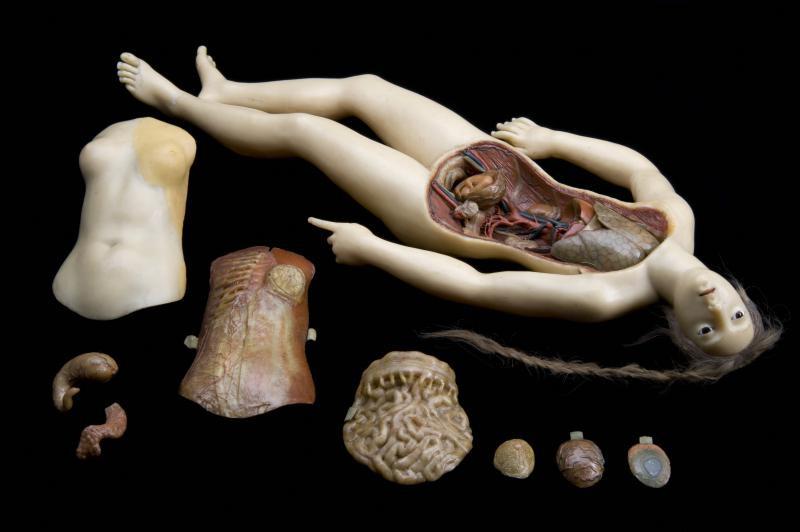 Anatomical Venus photographed by Joanna Ebenstein