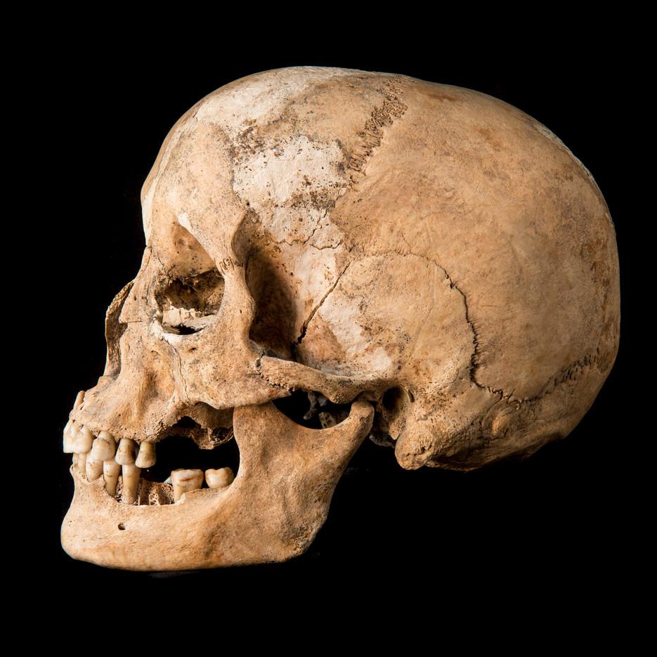 C12-16 Male skull 1822SJ side.jpg