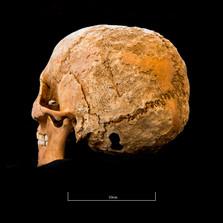 Skull 5082G - 6399.jpg