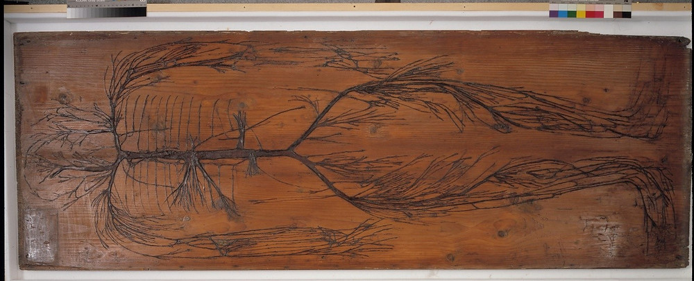 Dissection of arteries (and sometimes nerves) on a wooden slab - Evelyn table