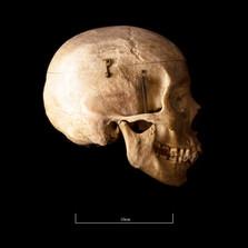 Skull FR30 - 9142.jpg