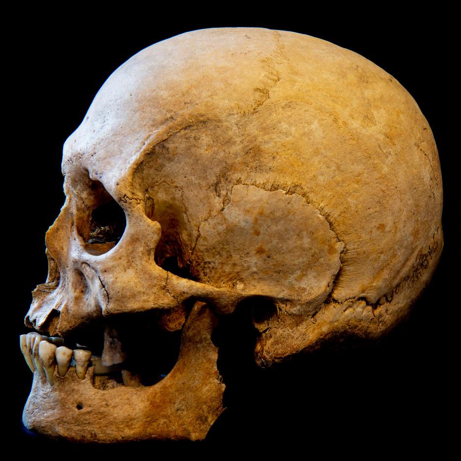 C12-16 Male skull 0121SJ side.jpg