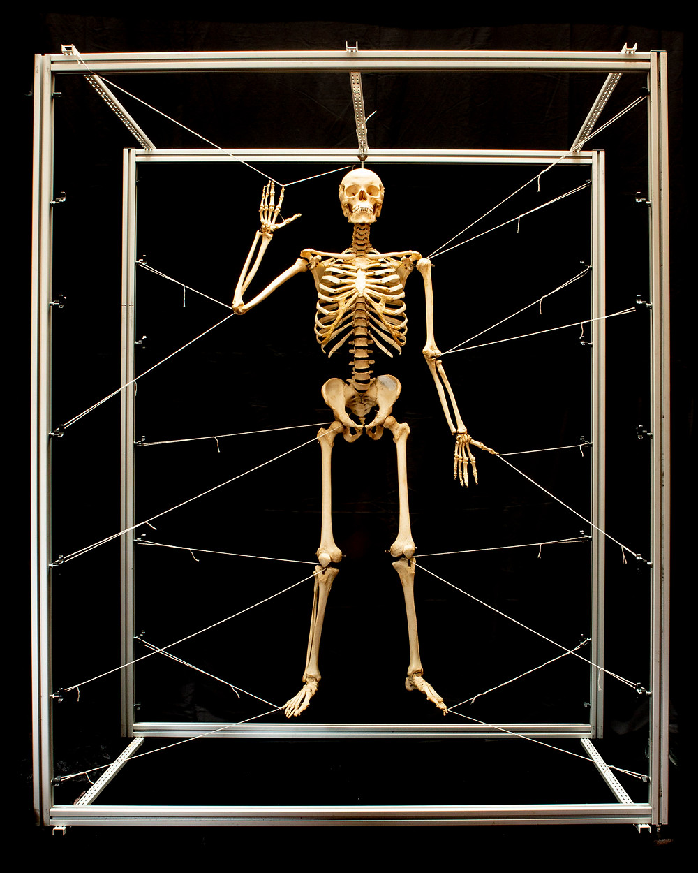 Skeleton cage photo as cover shot for Osteology2 portfolio