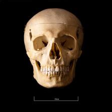 Skull B3R7 - 9151.jpg