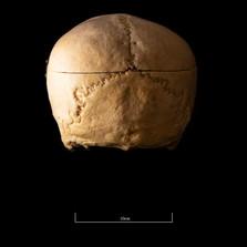 Skull B3R7 - 9158.jpg