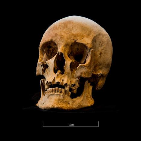 Skull 653SJ - 6238.jpg