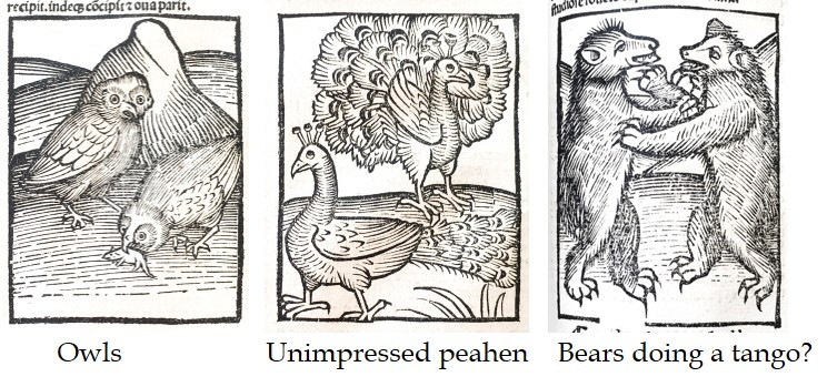 Owls, unimpressed peahen and bears doing a tango