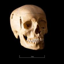 Skull B3R7 - 9163.jpg