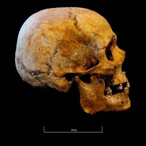 Skull 5723SJ - 7050.jpg