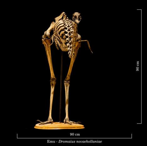 Emu 8270.jpg
