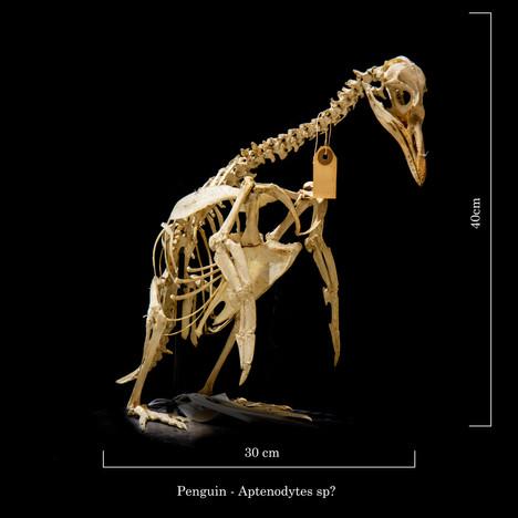 Penguin 6652.jpg