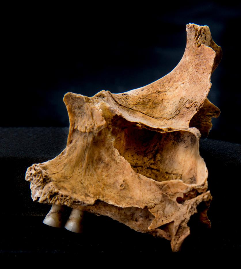 C12-16 6432SJ skull back.jpg