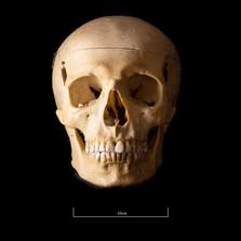Skull B3R7 - 9164.jpg