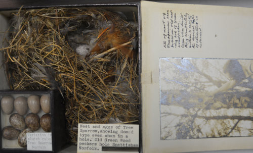 A box with a nest and eggs. A smaller box with additional eggs. And a photo and note on the right showing a nest up a tree.