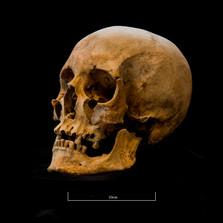 Skull 653SJ - 6240.jpg