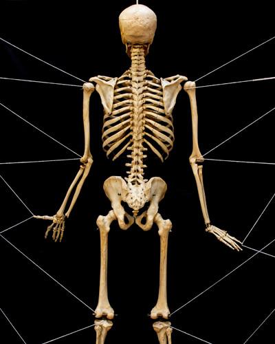 Skeleton from behind - Susan Elaine Jones new work 2019