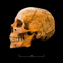 Skull 5082G - 6396.jpg