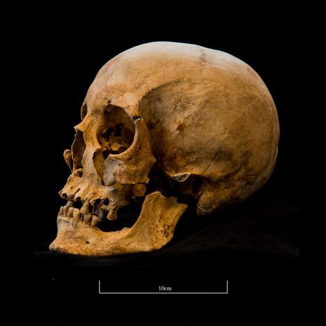 Skull 653SJ - 6241.jpg