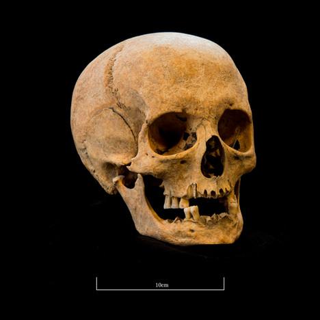 Skull A044EH - 6313.jpg