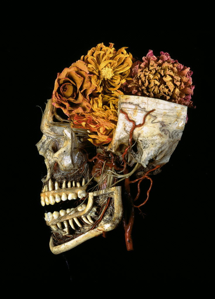 Steven Katzman, 1994, Anatomical preparation of a skull with dried Dahlias