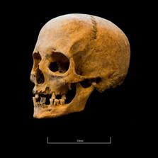 Skull A044EH - 6297.jpg