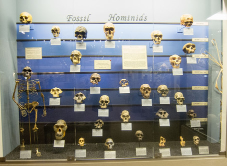 Uncle Neanderthal and Auntie Denisovan