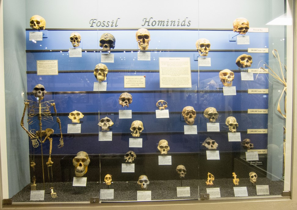 Fossil Hominids display at the Museum of Osteology, Oklahoma