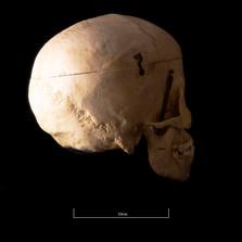 Skull NC1K - 9222.jpg