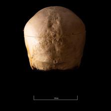 Skull NC1K - 9224.jpg