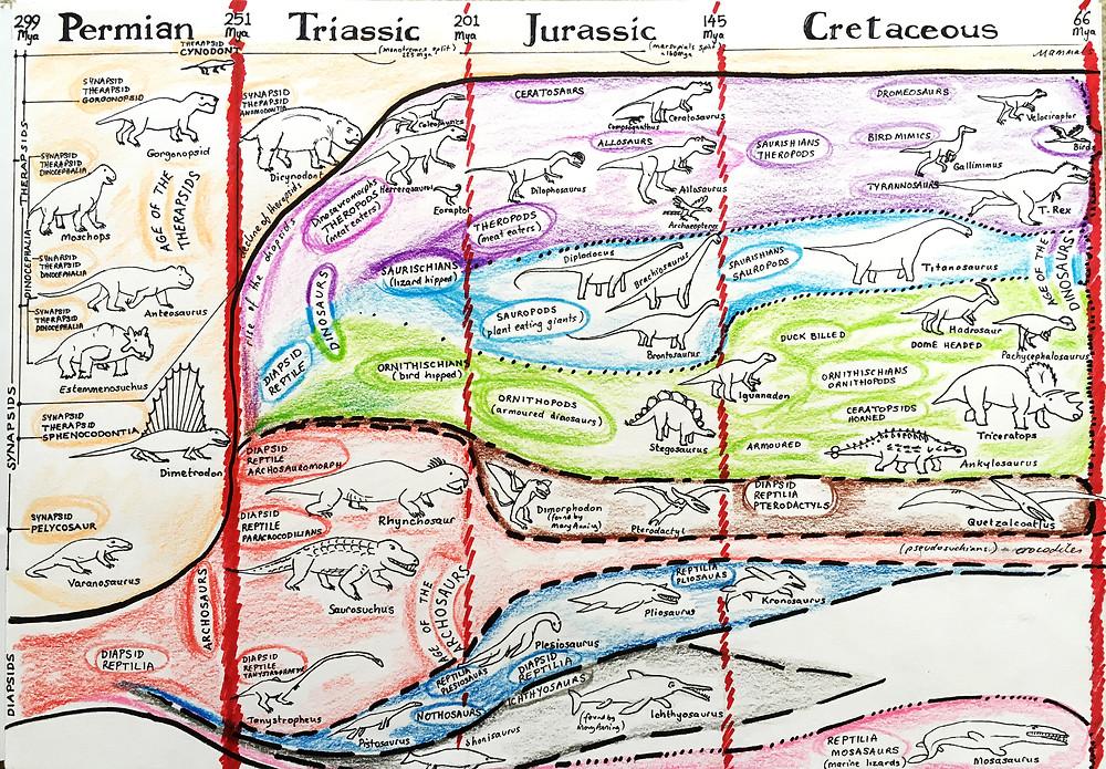 Evolution in the Mesozoic era summary diagram