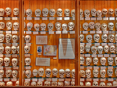 SOS - Save our skulls!
