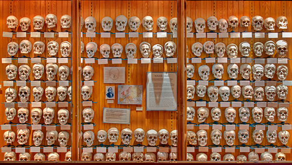 Hyrtl skull collection at the Mutter Museum