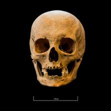 Skull A044EH - 6294.jpg