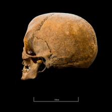 Skull A044EH - 6302.jpg