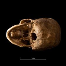 Skull FR30 - 9148.jpg