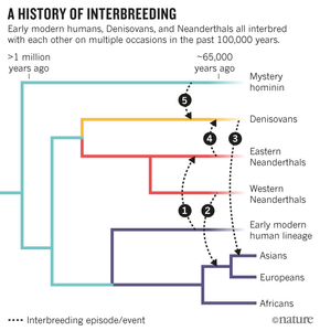 "Nature's article on the ""interbreeding bonanza"", 17 Feb 2016"