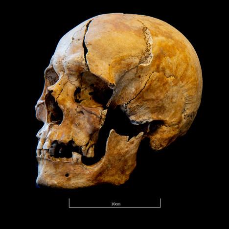 Skull 5723SJ - 7043.jpg