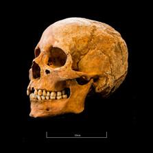 Skull 5082G - 6395.jpg