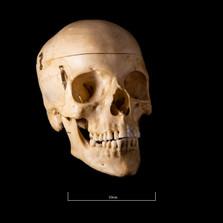 Skull NC1K - 9218.jpg